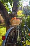 篮子用在一辆老自行车的新鲜的水多的杏子 库存图片