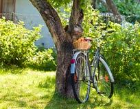 篮子用在一辆老自行车的新鲜的水多的杏子 免版税库存照片
