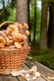 篮子用在桌上的蘑菇 免版税库存照片