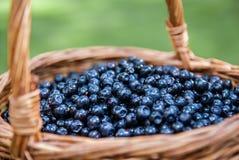 篮子用在草坪的新鲜的蓝莓 免版税库存图片