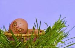 篮子用在草的鸡蛋。 免版税库存图片