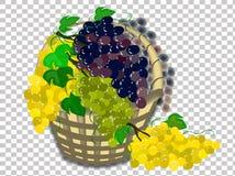 篮子用在透明背景的葡萄 库存例证