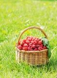 篮子用在绿草的成熟莓 免版税库存图片