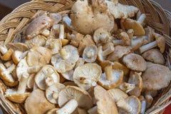 篮子用新鲜的圣乔治蘑菇 免版税库存图片