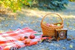篮子用站立在草和时钟,黄色的红色毯子附近的果子在背景离开 图库摄影