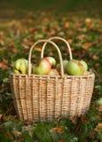 篮子用红色和黄色苹果 免版税库存照片