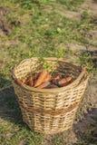 篮子用红萝卜 免版税库存图片