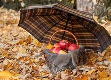 篮子用苹果在伞下在秋天森林,黄色离开背景 图库摄影
