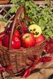 篮子用苹果在庭院里 秋天收获果子 充分篮子维生素和果子 苹果收集 库存照片