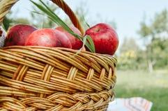 篮子用苹果在庭院里 免版税库存照片