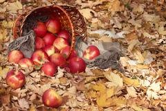 篮子用苹果在秋天森林,黄色离开背景 免版税图库摄影