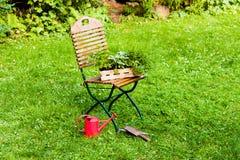 篮子用草本在庭院里 库存照片