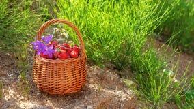 篮子用草莓和花 免版税库存照片
