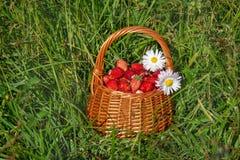 篮子用草莓和花 库存照片