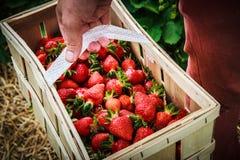 篮子用草莓在一个人的手上 免版税库存照片