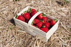 篮子用草莓 免版税库存图片