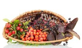 篮子用莓果、被隔绝的野玫瑰果、接骨木浆果和花揪 库存图片