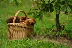 篮子用蘑菇在树下 免版税图库摄影
