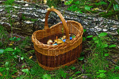 篮子用蘑菇在森林里 库存照片