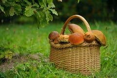 篮子用蘑菇在橡树下 免版税库存照片