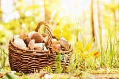 篮子用蘑菇 库存图片