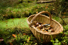 篮子用蘑菇 免版税库存图片