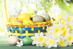 篮子用黄水仙鸡蛋和花束在a背景的  免版税库存照片