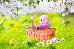 篮子的愉快的婴孩在开花的苹果树庭院里 免版税库存图片