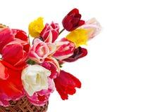 篮子美丽的郁金香 图库摄影