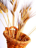 篮子聚宝盆麦子 库存照片