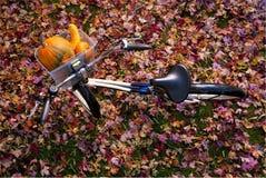 篮子自行车概览的南瓜 免版税图库摄影