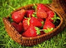 篮子草莓 免版税库存图片