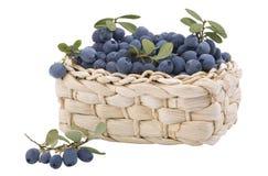 篮子蓝莓新鲜充分小 免版税库存照片