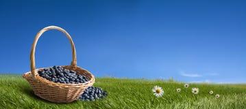 篮子蓝莓 免版税库存图片