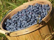 篮子蓝莓 免版税库存照片