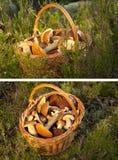 篮子蘑菇 免版税库存照片