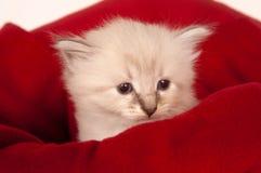 篮子逗人喜爱的小猫 库存照片