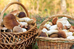 篮子采蘑菇porcini 图库摄影