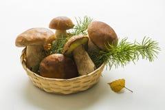 篮子采蘑菇porcini 库存图片