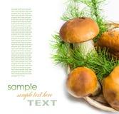 篮子采蘑菇porcini 库存照片