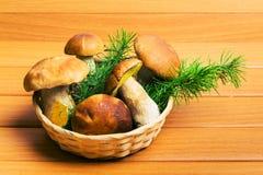 篮子采蘑菇porcini 免版税图库摄影