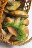篮子采蘑菇porcini 免版税库存照片