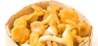篮子黄蘑菇 免版税库存图片
