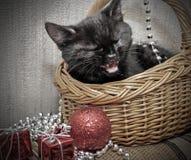 篮子黑色小猫 图库摄影