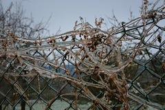 篱芭、植物和冰 库存照片