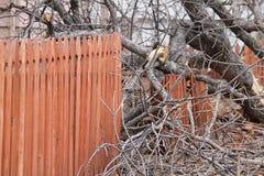 篱芭下来,下来树 库存照片