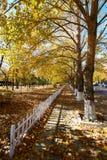 篱芭和下落的叶子在秋天停放 免版税库存图片