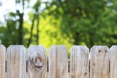 篱芭和户外树后院背景 免版税库存照片