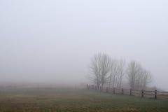 篱芭和树在雾 免版税库存图片