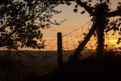 篱芭和树现出轮廓反对日落 免版税库存照片